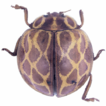 New faunistic record of two species of ...
